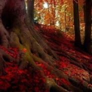 Лисхенотские леса