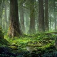 Леса Света - Тьмы